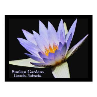 SG Blue water lily Postcard #280N  0280