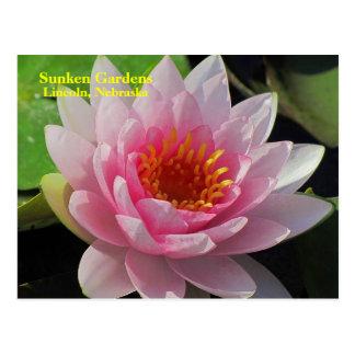 SG Lincoln, Nebraska pink water lily #150N  0150 Postcard