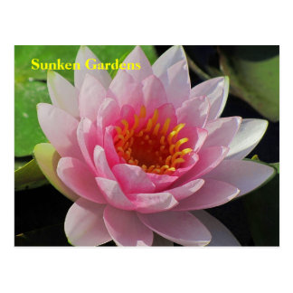 SG Lincoln, Nebraska pink water lily #152N  0152 Postcard