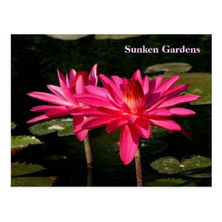SG Pink H2O Lilies Lincoln, NE #160  0160 Postcard