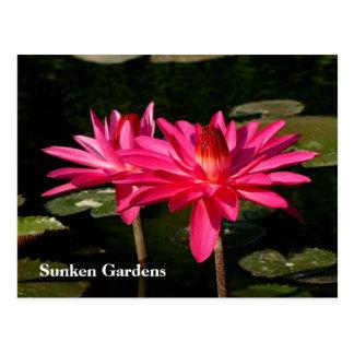 SG  Pink H2O Lilies Lincoln, NE #370  0370 Postcard
