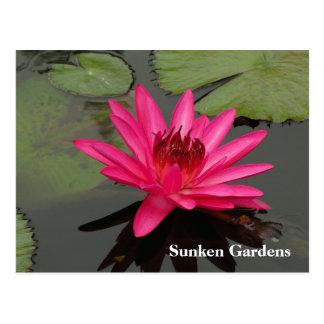 SG Pink Water Lily #56n  0056 Postcard