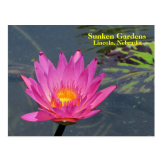 SG Purple water lily #201n  0201 Post Card