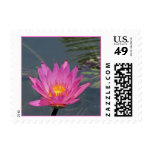 SG Purple water lily postage stamp #100  00100100