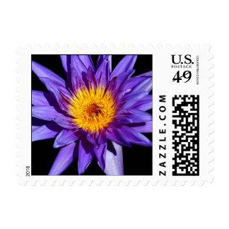 SG Rhonda Kay Trop Waterlily Postage Stamp 1 2015