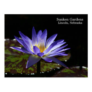 SG Tropical waterlily 1 2015 Postcard