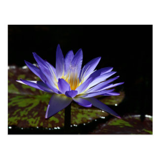 SG Tropical waterlily 2 2015 Postcard
