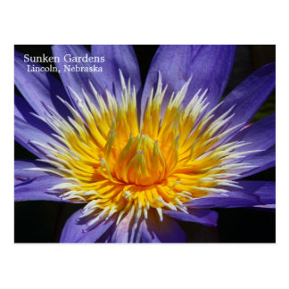 SG Tropical waterlily postcard 5 2015
