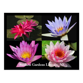 SG Waterlily Collage Postcard #6Nw  600