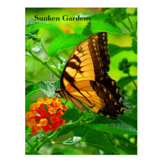 SG Yellow Swallowtail Postcard #245N  0245