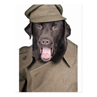 Sgt Labrador Postcard