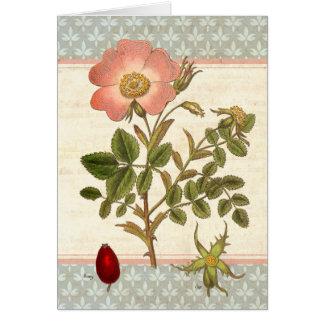 Shabby Chic Dog Rose Rose Hip Tea Card