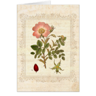 Shabby Chic Vintage Rose Old Paper Card
