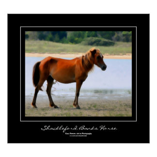 Shackleford Banks Horse Black Border Poster