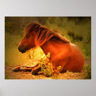 Shackleford Banks Pony #3 Poster