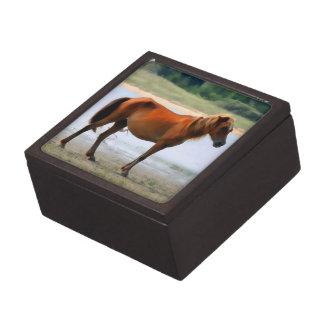 Shackleford deposita el caballo cajas de regalo de calidad