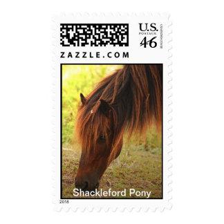 Shackleford Pony Postage Stamp