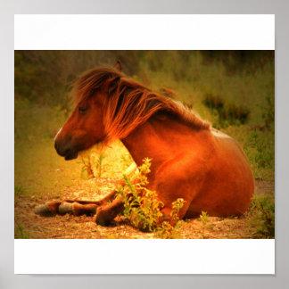 Shackleford Pony POster