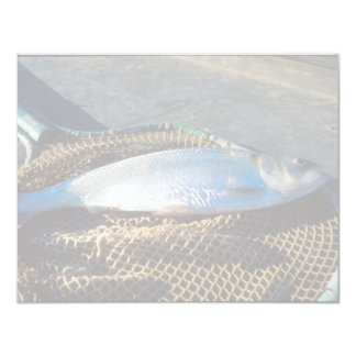 Shad In Net Card