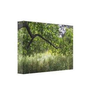 Shade Tree Canvas Prints