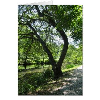Shade Tree Card
