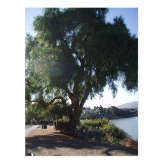 Shade tree postcard