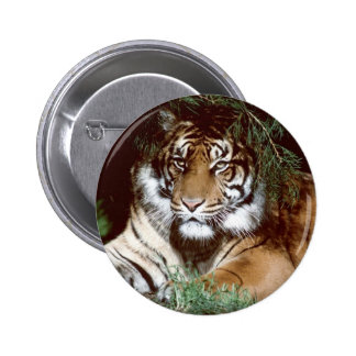 Shaded Tiger 2 Inch Round Button