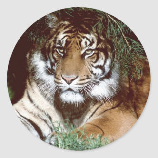 Shaded Tiger Classic Round Sticker