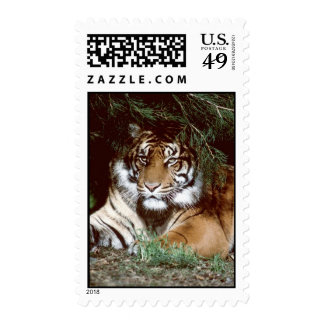Shaded Tiger Postage Stamps