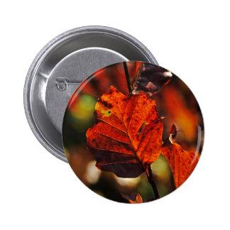 Shades of Autumn (12).jpg Pins