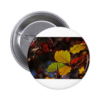 Shades of Autumn (7).jpg Button