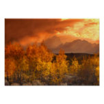 Shades Of Autumn Art Mural Posters