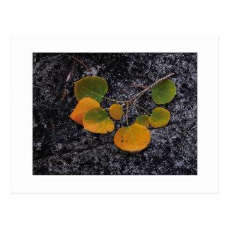 """Shades Of Autumn"" Postcard"