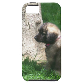 Shades Of Grey Puppy Tree iPhone SE/5/5s Case