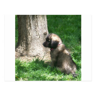 Shades Of Grey Puppy Tree Postcard