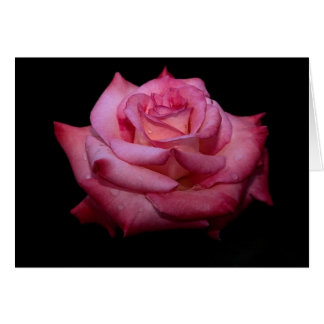 Shades of Pink Rose Card - blank