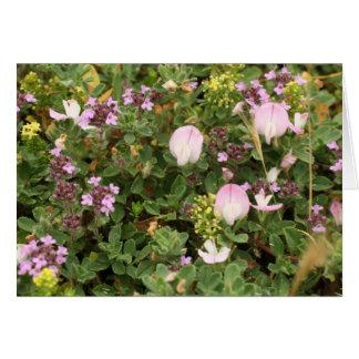 shades of violet greeting card
