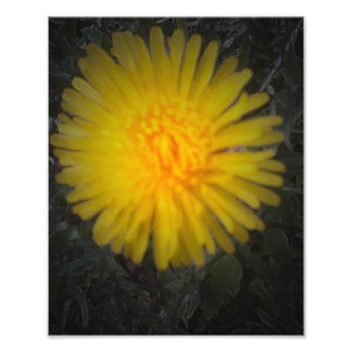 Shadow dandelion photo print