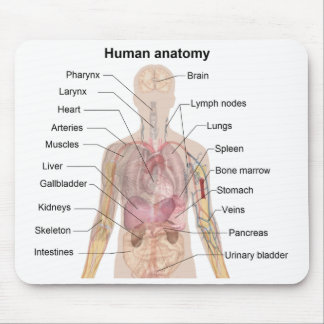 Shadow Diagram of the Human Anatomy Mouse Pads