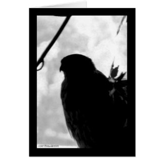 Shadow Hawk Greeting Card