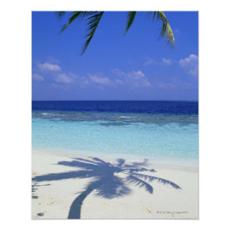 Shadow of Palm Tree Poster