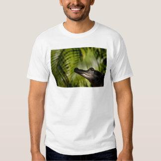 Shady Alligator shirt