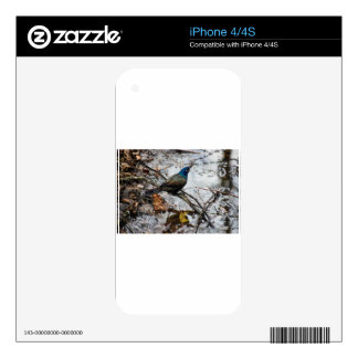 Shady Day Bird iPhone 4S Skins