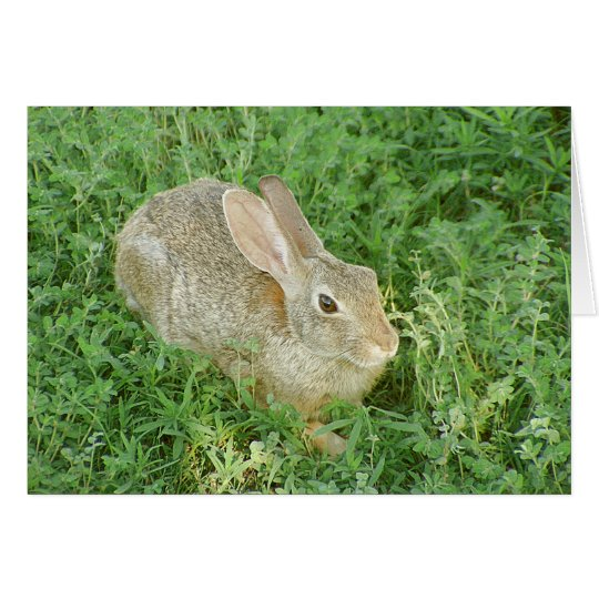 Shady Greens Bunny Card