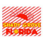 Shady Grove, Florida Postcard