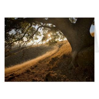 Shady Oak and California Susnet Card