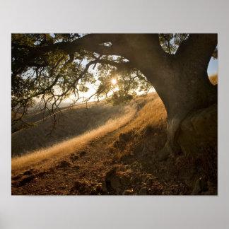 Shady Oak and California Susnet Print