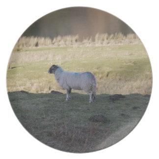 Shady Sheep Melamine Plate