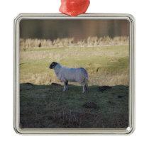 Shady Sheep Metal Ornament