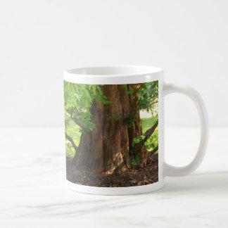 Shady Tree Mugs
